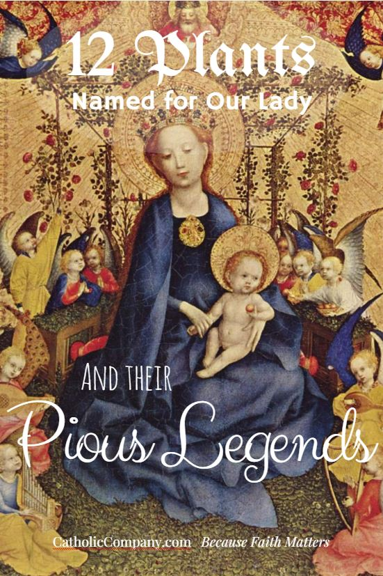 Learn about the legends connected with various plants named for the Blessed Mother