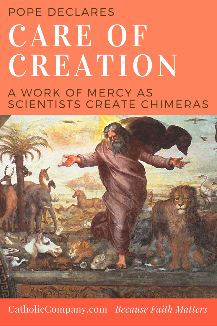 Pope Francis adds Care of Creation added to Spiritual and Corporal Works of Mercy