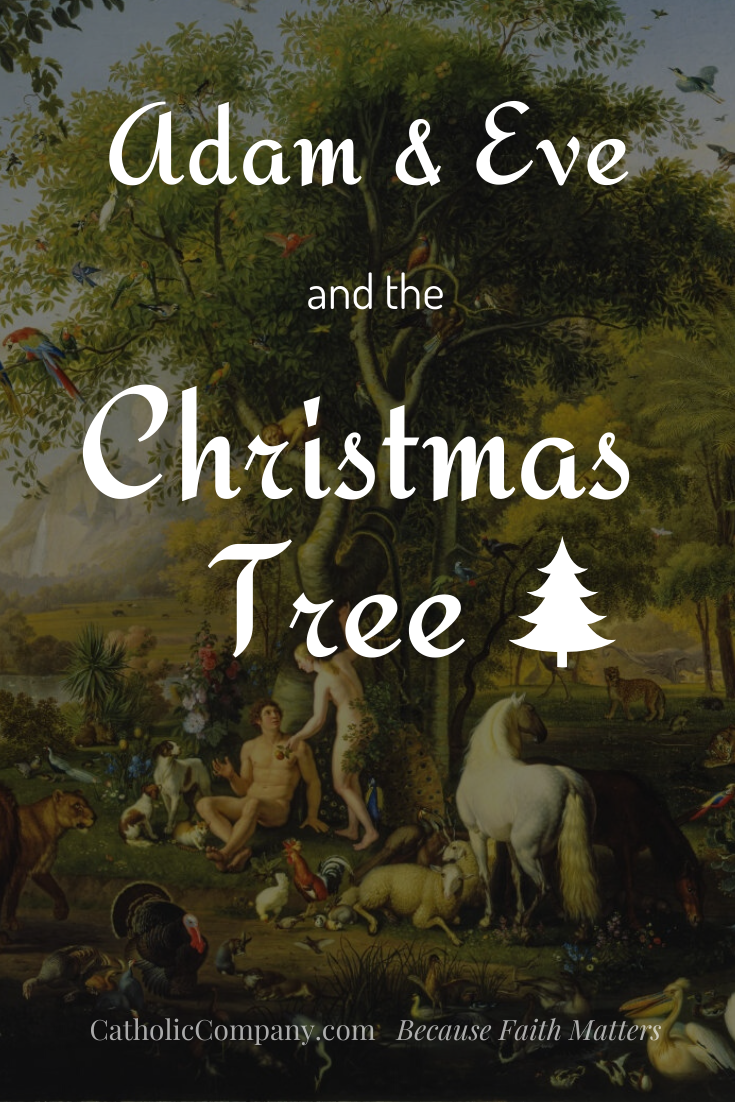 Do you know the connection between Adam, Eve, and the Christmas tree?